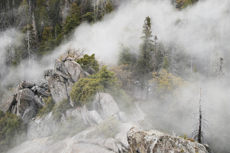 Forest in the clouds, pine trees, nature landscape