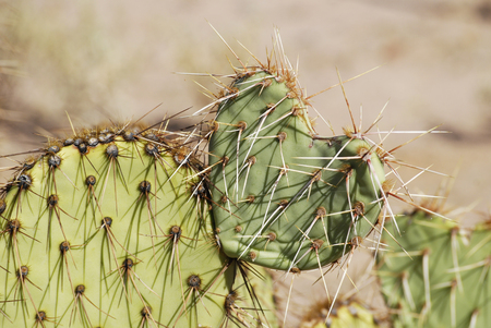 Cactus in heart shape with sharp spines, close up, concept of painful love Stok Fotoğraf