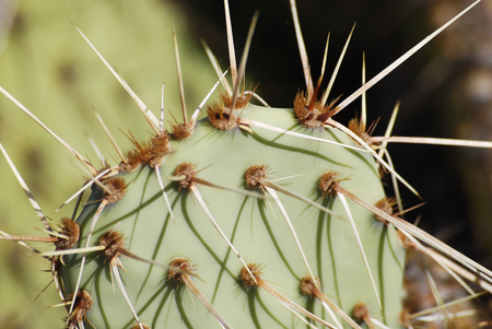 Bright green cactus close up with sharp spines Stok Fotoğraf