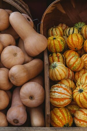 Butternut pumpkin and carnival squash in wooden boxes on a farms market,