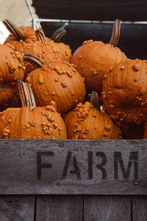 Orange warty goblin pumpkin stand, pumpkins in wooden box on a farmers market