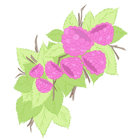 Raspberries on a branch.Vector illustration, bright, hand-drawn
