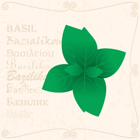 Basil leaves in vintage style with text