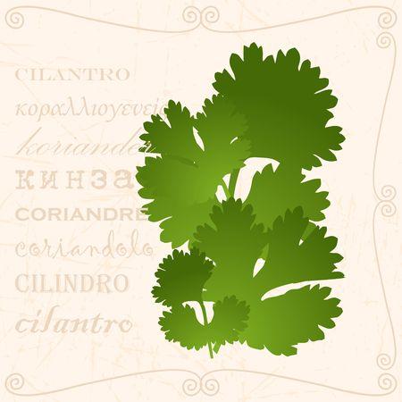 Sprig of cilantro in vintage style Ilustrace