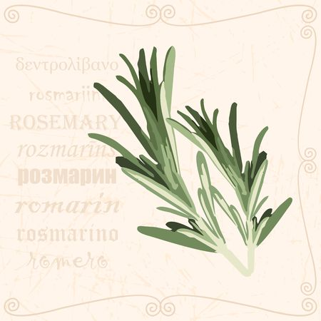 Sprig of in vintage style Ilustrace