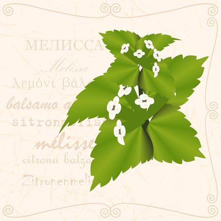 Sprig off with leaf in vintage style illustration.