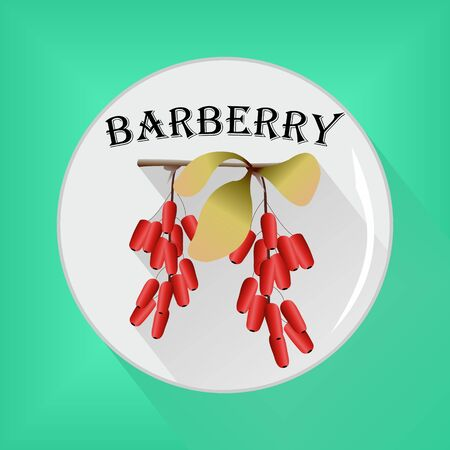 Barberry seasoning sticker flat icon vector image