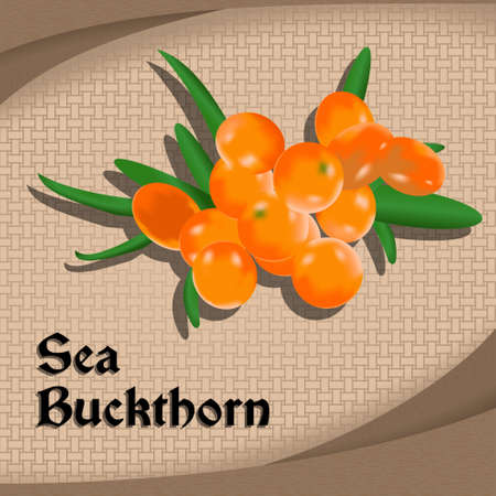 Vintage style label or sticker with sea buckthorn. Vector illustration