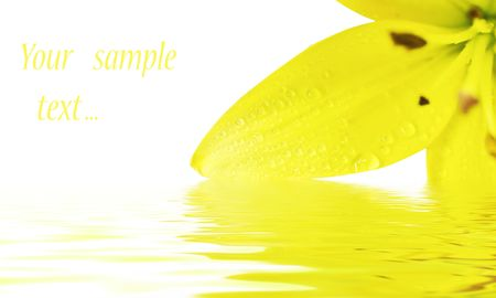 congratulatory: congratulatory card whise Flower of a yellow lily