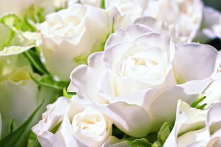 Flowers of white roses close up