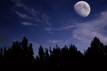 night landscape with the moon, trees silhouette, clouds and stars photo