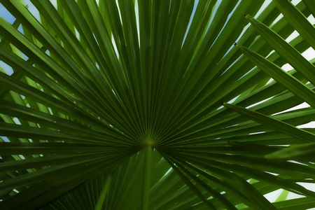 The leaves of palm tree close up photo