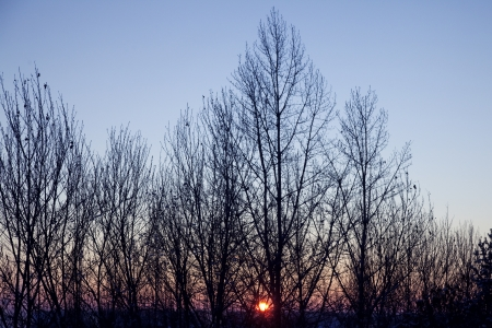 Winter bare wood against a red sunset photo