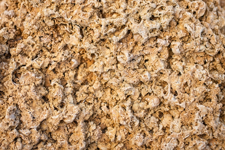 fungous: The texture of limestone blocks closeup