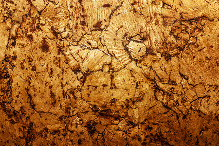 corkwood: Texture of corkwood decoration material closeup