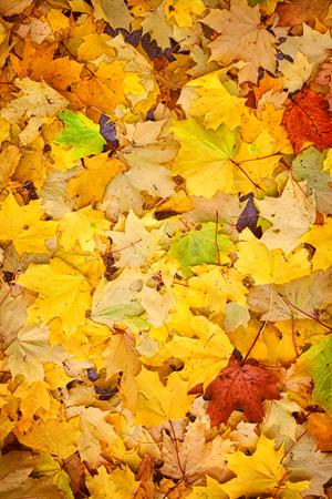 Natuurlijke achtergrond met kleurrijke gevallen herfstbladeren Stockfoto