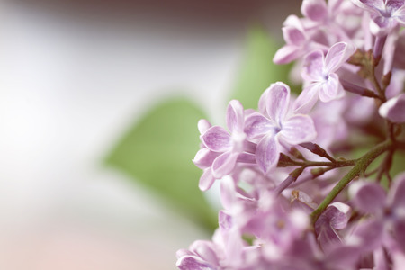 Floral background with lilac flowers close-up Imagens