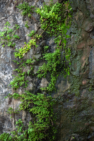 humid: Gray wet stone covered with moss and green plants