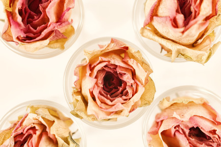 Floral Background with five dry pink roses flowers close-up Imagens