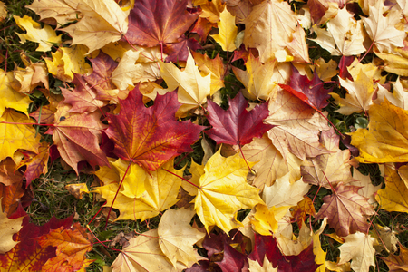 Background of fallen autumn leaves on the ground Imagens