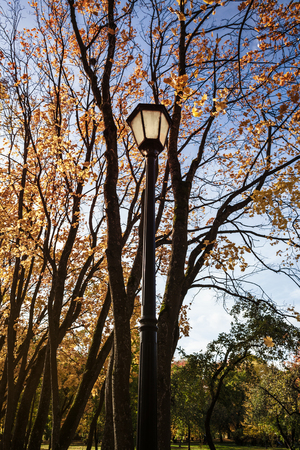 Metal old lantern on the background of the autumn trees Imagens