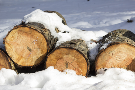 Pile of felled wood logs in the snow in winter forest Stock Photo