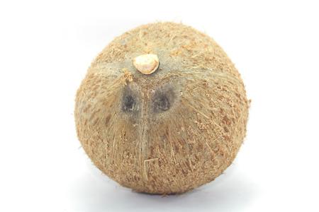 coconut seedlings: Coconut