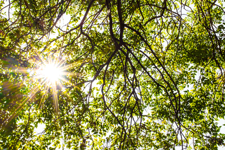underneath: Sun flare though fresh leaves in bright spring time, natural background.