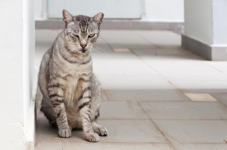 one eye: grey striped cat one eye closed