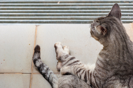 view from behind: grey striped cat sitting on floor view from behind