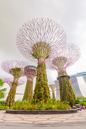 enhancing: SINGAPORE - JUNE 18 2016 : Garden by the Bay super tree on JUNE 18, 2016 in Singapore. It is part of a government strategy aimed to raise the quality of life by enhancing greenery and flora in Singapore. Editorial