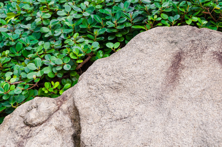 rock texture with lush green bush behind