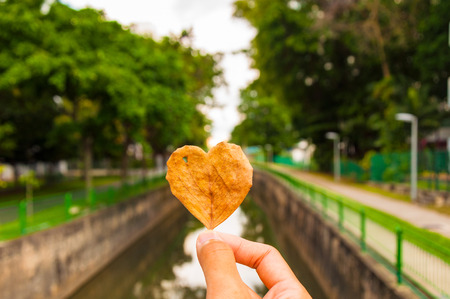 heart shape leaf in hand with park in background Stock Photo