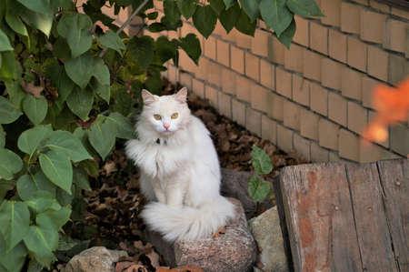 white fluffy cat posing for the camera Banco de Imagens