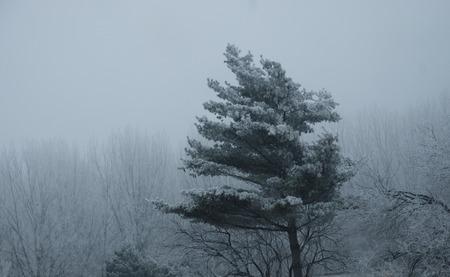 winter blues: winter tree