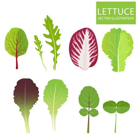 Lettuce Types. Set Of Salad Bowl. Lettuce Leaf. Cress, Red Lettuce, Rucola, Iceberg, Arugula, Radicchio