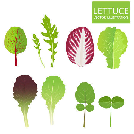 Lettuce Types. Set Of Salad Bowl. Lettuce Leaf. Cress, Red Lettuce, Rucola, Iceberg, Arugula, Radicchio