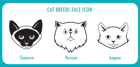 siamese: Cat Breeds Face Icons. Angora, Persian, Siamese. Black And White Vector On A White Background. Cat Breeds With Pictures. Cat Breeds Of The World. Cat Breeds With Big Eyes. Breeds For Children, Toy.