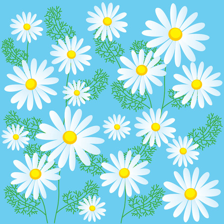 chamomile: Chamomile Flowers On A Blue Background. Seamless Vector Illustrations. Chamomile Flowers For Sale. Chamomile Flowers Organic. Chamomile Plant. Chamomile Flowers. Chamomile Lawn. Chamomile Classics.