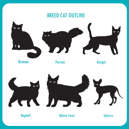 persian cat: Breed Cat Outline Icons. Black And White Vector On A White Background. Bengal, Birman, Persian, Ragdoll, Maine Coon, Sphynx. Best Cat Breed. Breed Cat Pictures. Breed Cat For Sale. Mixed Breed Cat.