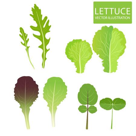 leaf lettuce: Lettuce Types Vector. Set Of Salad Bowl. Salad Vector Illustration. Vector Set Isolated On White Background. Lettuce Vegetable. Lettuce Leaf. Cress, Red Lettuce, Rucola, Iceberg, Arugula.