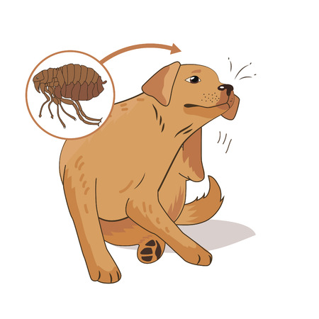Flea Infested Dog. Scratch The Flea Bugs. Vector Illustration On A White Background. Flea Bugs Life. Bugs Bites. Bugs Pictures. Flea Bugs On Animals. Flea Bug Bite Symptoms. Drain Flea Bugs. Ill Dog.