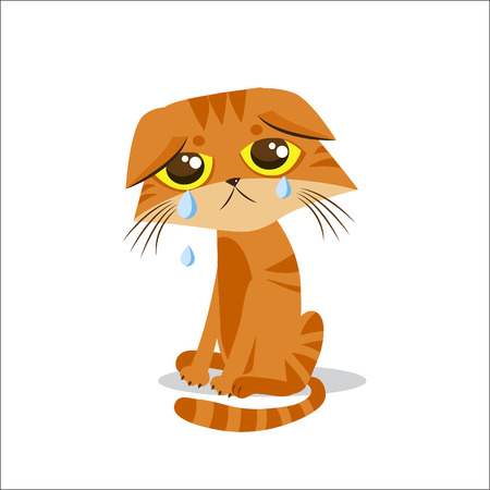 Sad Crying Cat. Cartoon Vector Illustration. Crying Cat Meme. Cat Face. Cat Picture. Crying Cat Emoticon. Cat Baby. Cat Tears. Cat Wants To Come In. Cat At Night. The Poor Cat. Weeping Cat. Illustration