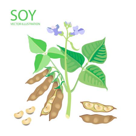 大豆。白の背景にベクトル イラスト セット。大豆タンパク質。販売のための大豆。大豆エストロゲン。大豆レシピ。大豆先物。大豆の植物。完全な  イラスト・ベクター素材