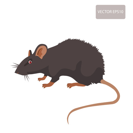 eliminate: Mouse, Rat Vector. Rat Isolated On White Background. Rat Vector Disease. Harmful Rodent, Parasite. Illustration