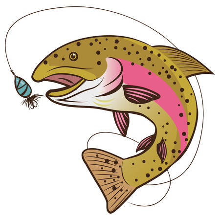 Rainbow Trout Vector Isolated On A White Background.  Fish Mascot Vector Illustration. The Real Fishing.
