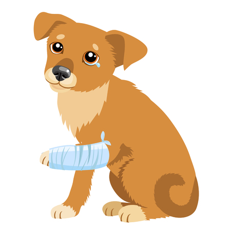 fractura: Dog Story triste. Ilustración Vectorial De Perro triste lindo o cachorro. Perro enfermo con el entablillado de la pierna. Tema veterinaria. Perro Abandonado de al refugio.