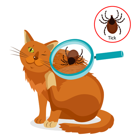 Cat Parasites. What To Know About Feline Parasites. Tick On Cat In The Fur As A Close Up Magnification Vector. Spread Of Infection. Veterinary Medicine Vector.