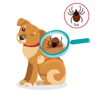 개 기생충. 개 확대 벡터로 모피에서 틱. 감염의 확산. 애완 동물 수의학 벡터입니다.