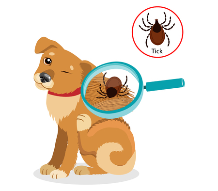 Dog Parasites. Tick On Dog In The Fur As A Close Up Magnification Vector. Spread Of Infection. Pet Veterinary Medicine Vector.